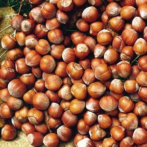 Ferrero acquisisce la turca Oltan, tra i leader mondiali delle nocciole