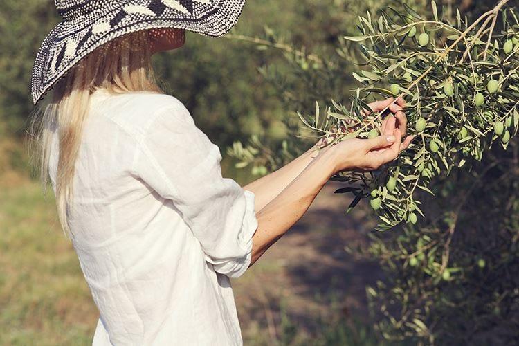 Frantoi, oliveti, musei e piatti tipici Il turismo può ripartire dall'olio