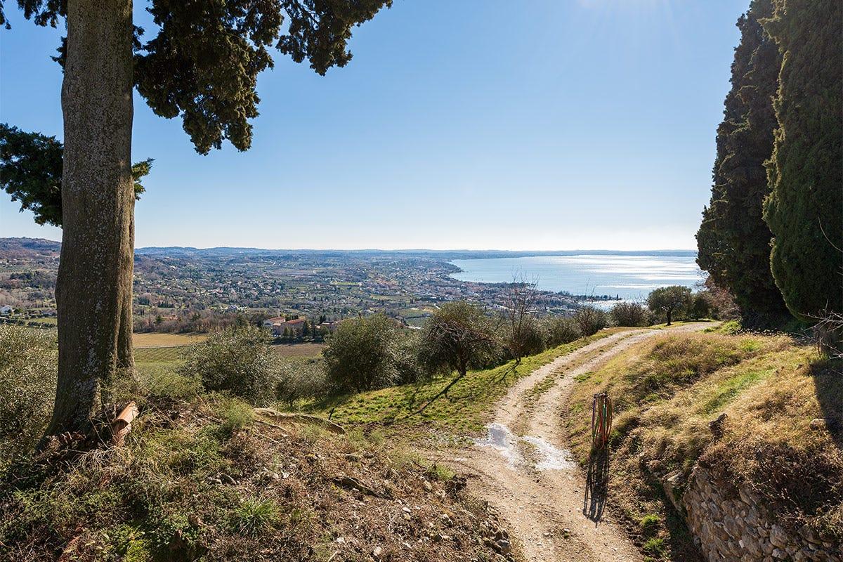 Una strada dell'olio sul Garda, da fare anche in bicicletta