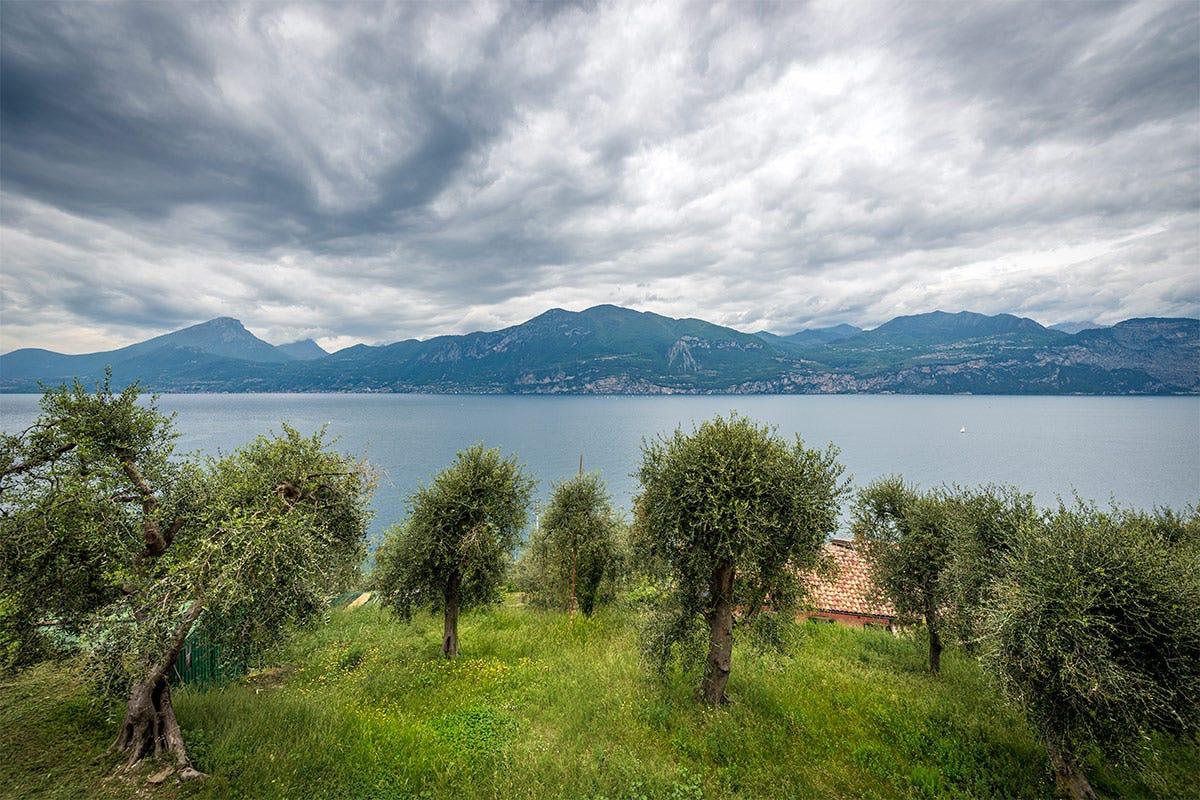 Chicche di oro verde sul lago di Garda