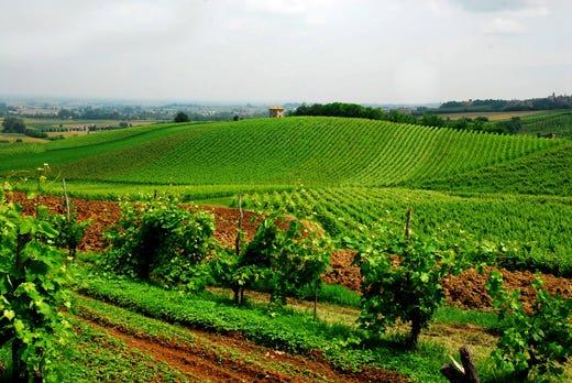 Risultati immagini per vino bio