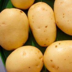 La patata della Sila è Igp