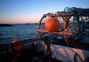 In Svezia a caccia di frutti di mare Partita la stagione dell'astice