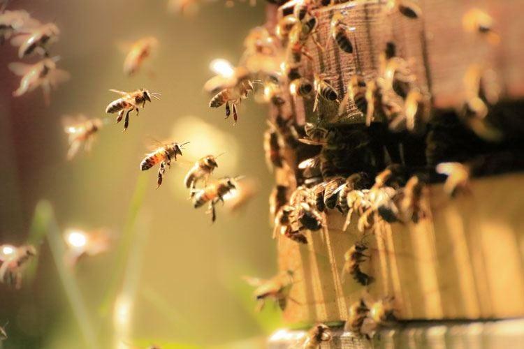 Raccolta di miele quasi azzerata Coldiretti: «È colpa del maltempo»