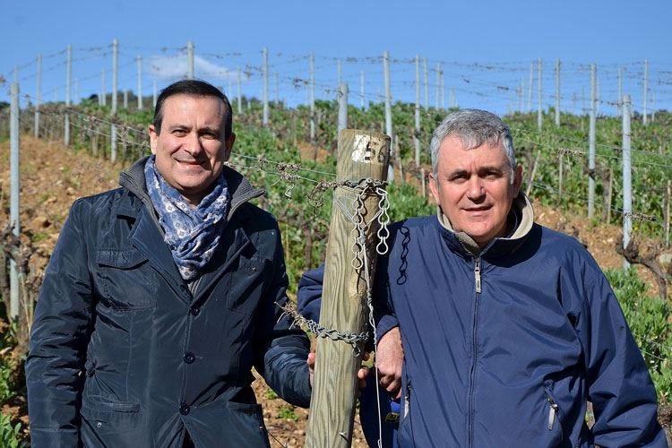 La Regola di Riparbella Venti ettari di vigne biologiche