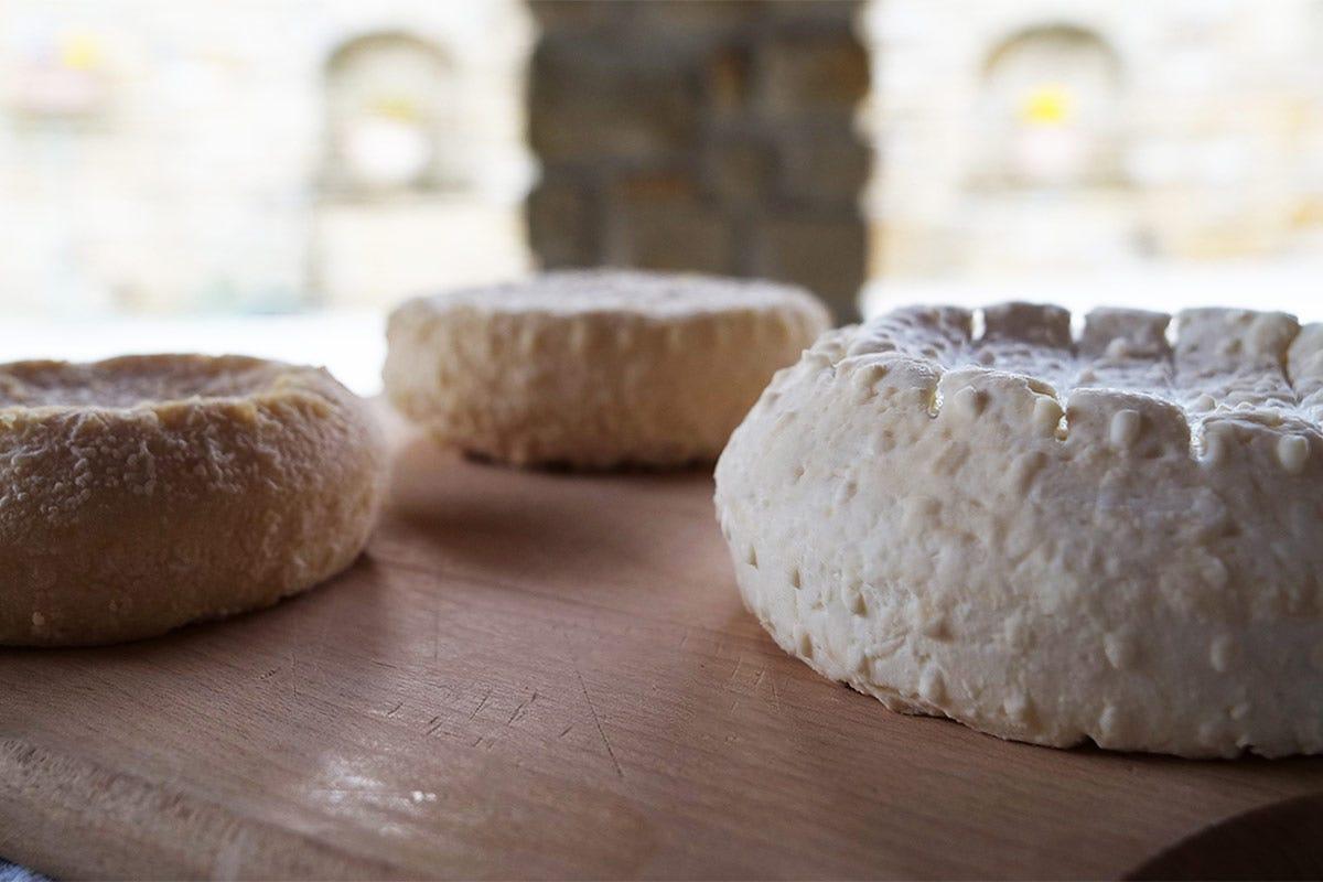 La stagionatura Robiola di Roccaverano Dop Il formaggio che traina un territorio