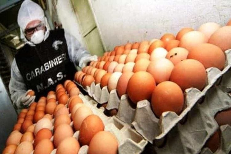 Cibo avariato nei locali Sequestrati carne, pesce e uova