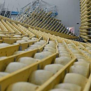 Sciacalli su Grana e Parmigiano Danni da 220 milioni di euro