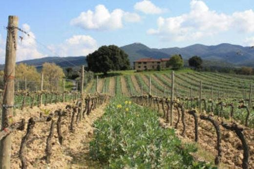 Bolgheri e la Riviera degli Etruschi mete ideali per una vacanza di buon gusto