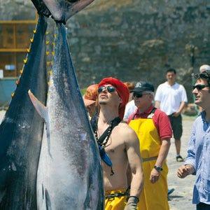 Girotonno 2012 a Carloforte Il tonno rosso fra tradizione e ...