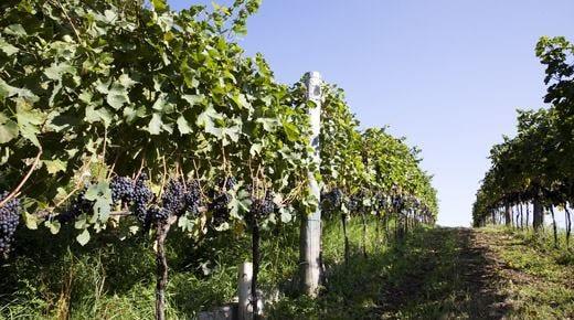 Doc Colleoni un successo tutto orobicoCantoni: più qualità e credibilità nei vini