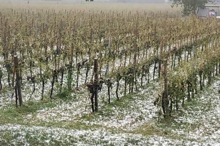 Nubifragio in Veneto, è allarme I viticoltori: A rischio la vendemmia