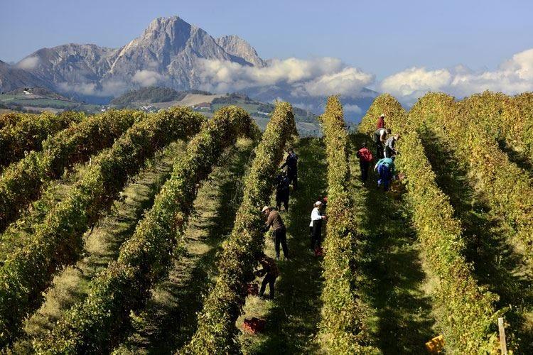 Montepulciano d'Abruzzo In Italia 18 milioni di consumatori