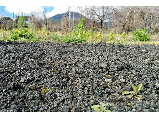I vini vulcanici Tutta l'importanza del terroir