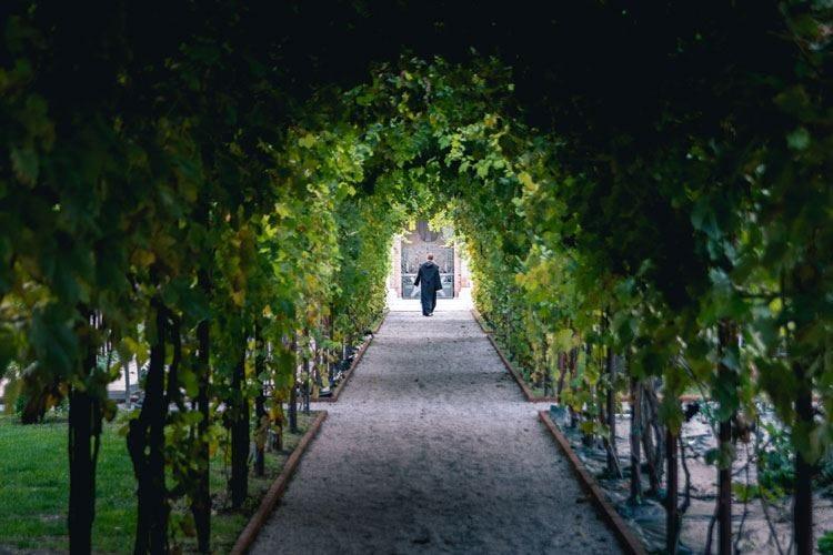 Dai vigneti del Convento S.Maria rinasce il vino dei Carmelitani Scalzi