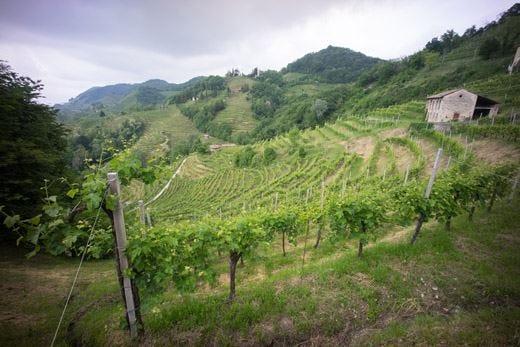 Natura, cultura e territorio trionfano a Vino in Villa Festival