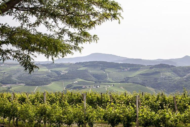Il vino traina la Valpolicella Ma il Consorzio: Mancano strutture