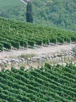 Palazzo del Vino rilancia il terroir vicentino